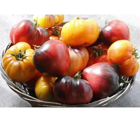 Top 10 2018 year Heirloom Tomatoes