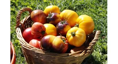 Kur Ieškoti  Įdomesnių  Pomidorų  Sėklų?